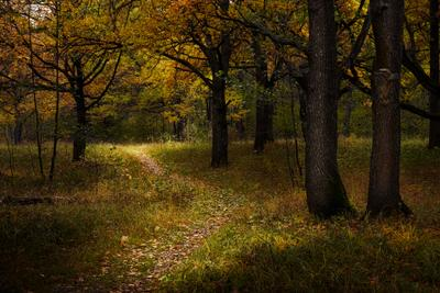 Лесная тропинка лес тропинка свет осень