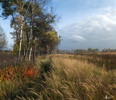 Перелески. природа осень утро