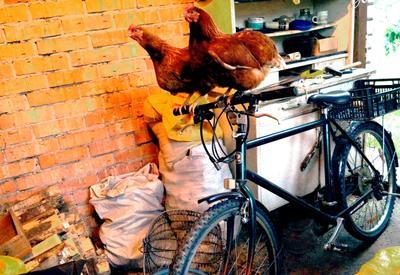 Велосипедистки юмор