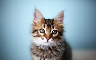 Matty кошки животные любовь макро кот милость