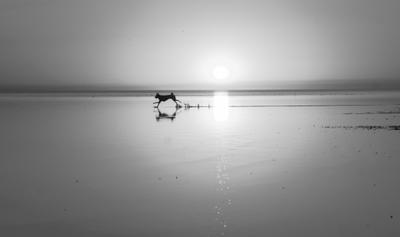вырвался черно-белое закат море штиль вода солнце собака лайка Цуцык