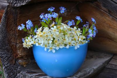 ***Деревенский букет природа цветы лето