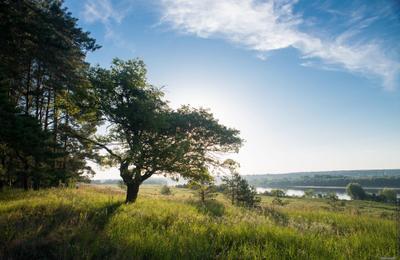 Раннее утро на Оке. утро ока Россия река солнце дерево