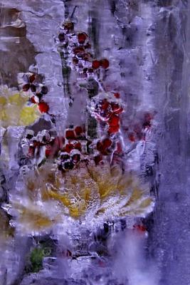 * Цветы для Снежной Королевы III* цветы букет лед