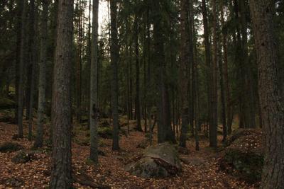 Монрепо Выборг парк осень Ленинградская область лес Твердыш залив