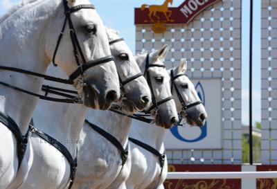 Каскад. Полицейские орловцы. ипподром лошадь кони полиция