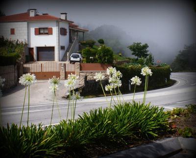 Нежность Португалия туман цветы горы