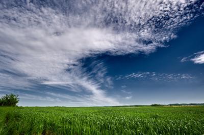 *** Небо обложка поле колосья красота природа солнце лето цвет