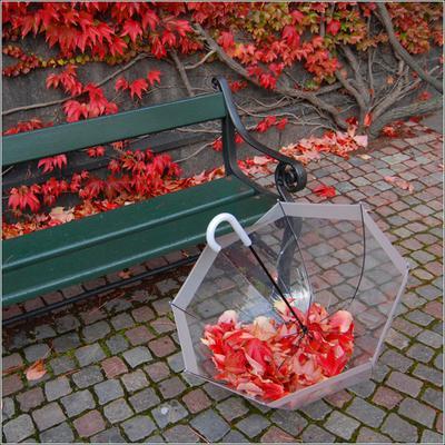 * * *  зонт, Копенгаген, осень