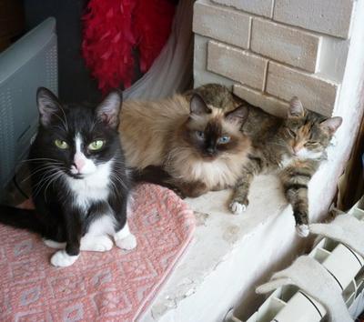 Теплое место кошки