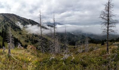 Осень. Горы туман