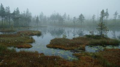 Осенние туманы 2 Осень туман болото