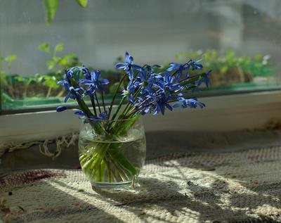 ....Весна опять пришла, и лучики тепла  Доверчиво глядят в моё окно. ... chaparin.v.p букетик весна пролески солнышко тепло