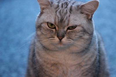 Кот - обоятель кот подмигивание обоятель котик