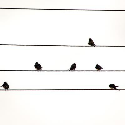 Утренние ноты птицы ноты провода ласточки утро