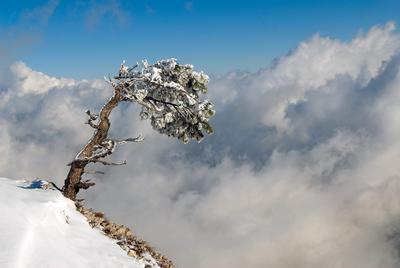 Над облаками 2 Крым зима снег сосна облака