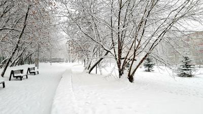 Белое зима снег белое чистота