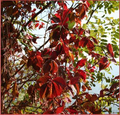 Осень листья осень