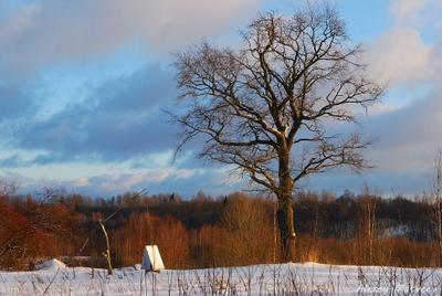 Зимняя псковщина зима дерево колодец