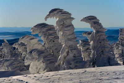 Pro волшебный Шерегешский лес Волшебный лес зима снег сугробы лыжи Сибирь Шерегеш Горная Шория