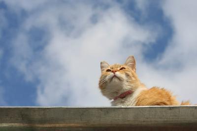 Мечтает кот