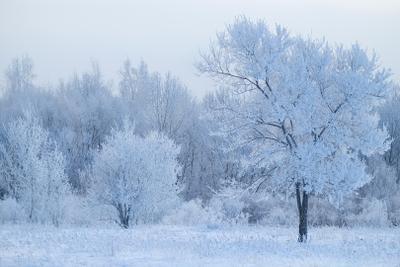 морозные кружева зима снег иней мороз деревья