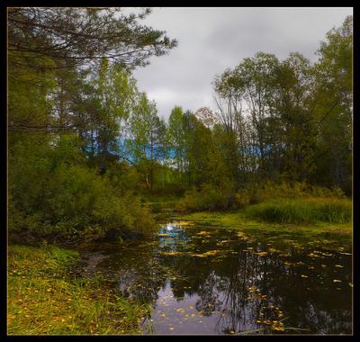 банальная осенняя... осень озеро листопад