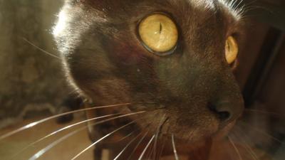 Кошачьи глаза кот глаза