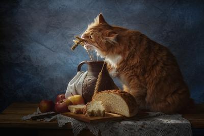 Вкусные колоски натюрморт композиция постановка сцена колоски хлеб кот питомец друг рыжий