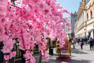 Украшения Москвы Москва пасха цветы саккура улица весна солнечный день