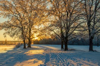 Холодное утро пейзаж nevant60 мороз.Брянск