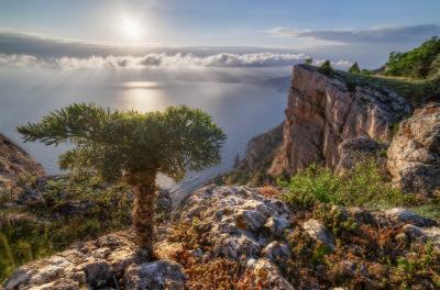"""""""Маленький зритель крымских красот..."""" Море пейзаж горы Крым дерево весна"""
