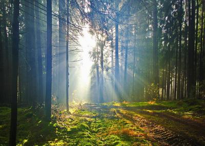 Солнечная тропа Лес