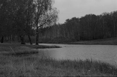 Черно - белая осень... пленка 35мм 2021 fomapan fomapan200