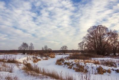 Берега в вечернем свете пейзаж природа зима вечер закат Воронеж река Усманка тростник снег луг