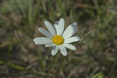 *** макро цветок утро солнечный свет