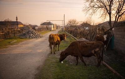 Дагестан, аул Кироваул Дагестан путешествия приключения мечеть коровы