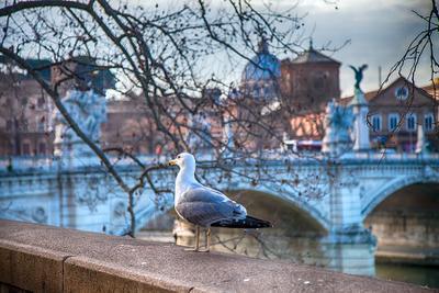 Rome 5906 Photographer Alexander Tolchinskiy
