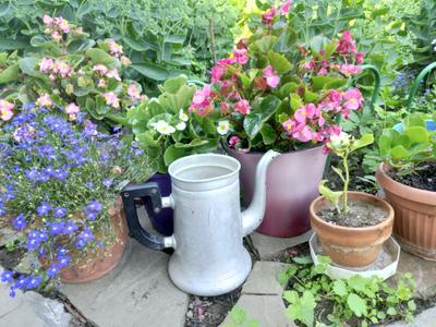 Цветы и чайник