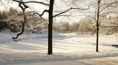 Кружевница зима Павловский парк зима речка лес