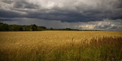 Утоление жажды поле