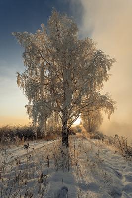 Холодный рассвет урал пейзаж снег береза туман