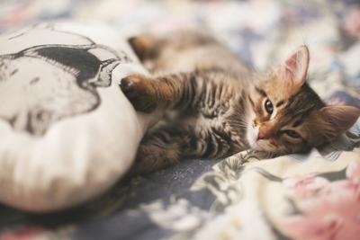 Matty with dingo кошки животные любовь макро кот милость сон уют