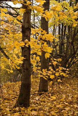 Пока не выпал снег осень лист желтый