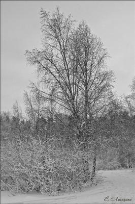 Чёрно-белый пейзаж (фото №1)