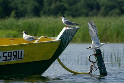 он улетел, но обещал вернуться...)) чайки лодка get-together