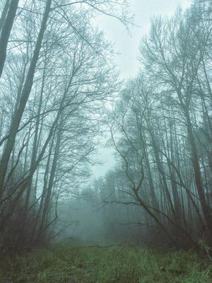 Мистический туман туман лес природа пейзаж путешествия путишествие рыбалка Туманное утро январь Украины Туманний ранок iphone iphonephoto Айфон Мобильное фото мобилография Январь 2020 mobilephoto