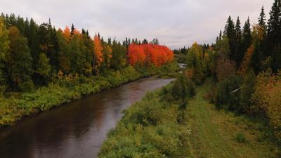 Краски осени. Осень краски тайга река деревья