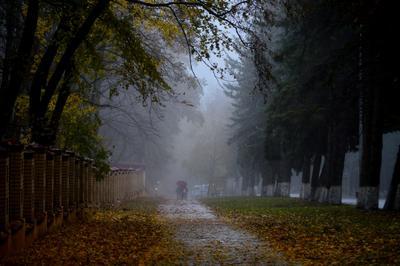 Осенние дожди..........