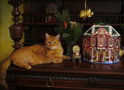Предновогоднее Новый год кот подарки